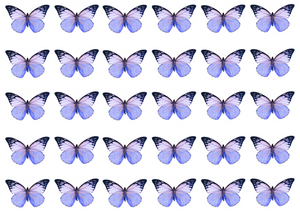 Mixed lilac edible wafer butterflies