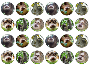 edible sloth cake decoration | cupcake toppers