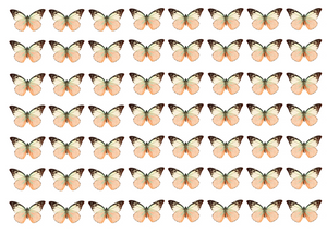 Peach edible wafer butterflies for cake decorating