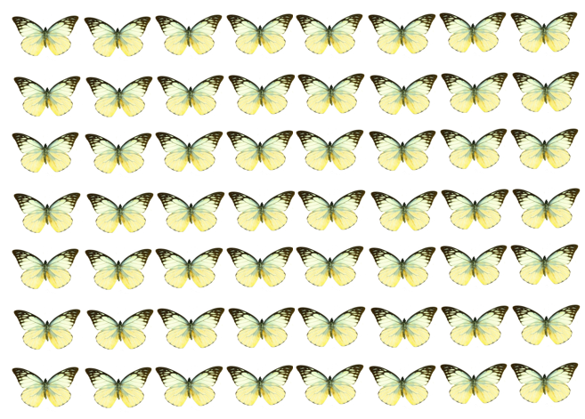 Lemon edible wafer butterflies for cake decorating