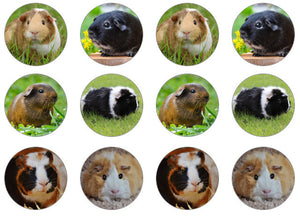 Edible cake toppers with guinea pigs set of 12