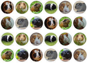Edible cake toppers with guinea pigs set of 24