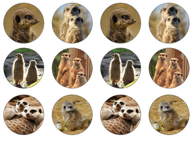 Meerkat Cupcake Toppers | The Village Cake Company