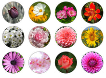 Flower Cupcake Toppers | Edible Flowers For Cakes | Set of 12