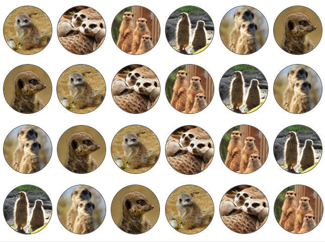 Edible Wafer Cupcake Toppers | Meerkat Gift | Set Of 24