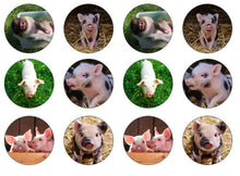 Piglet Cupcake Topper | Edible Pig Picture Cake Topper | Set Of 12
