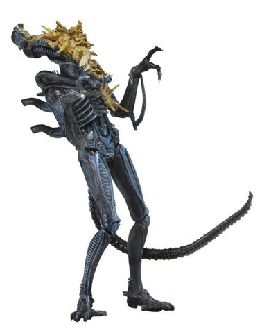 "Aliens Series 12 Assortment 7"" Action Figure - Battle Damaged Alien Blue - NECA"