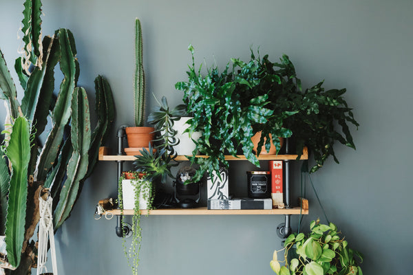 ALL THINGS GREEN & VIBRANT: BRINGING HOME THE BOTANICAL STYLE