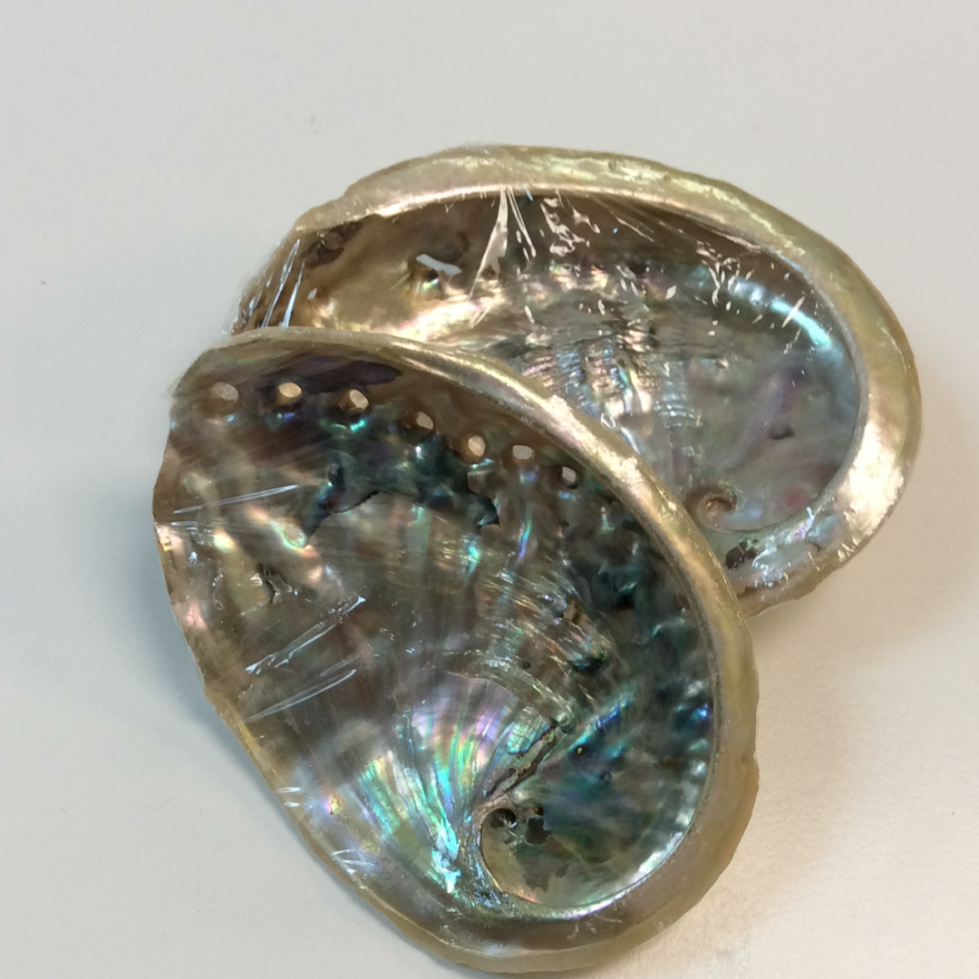 Small Abalone Shell
