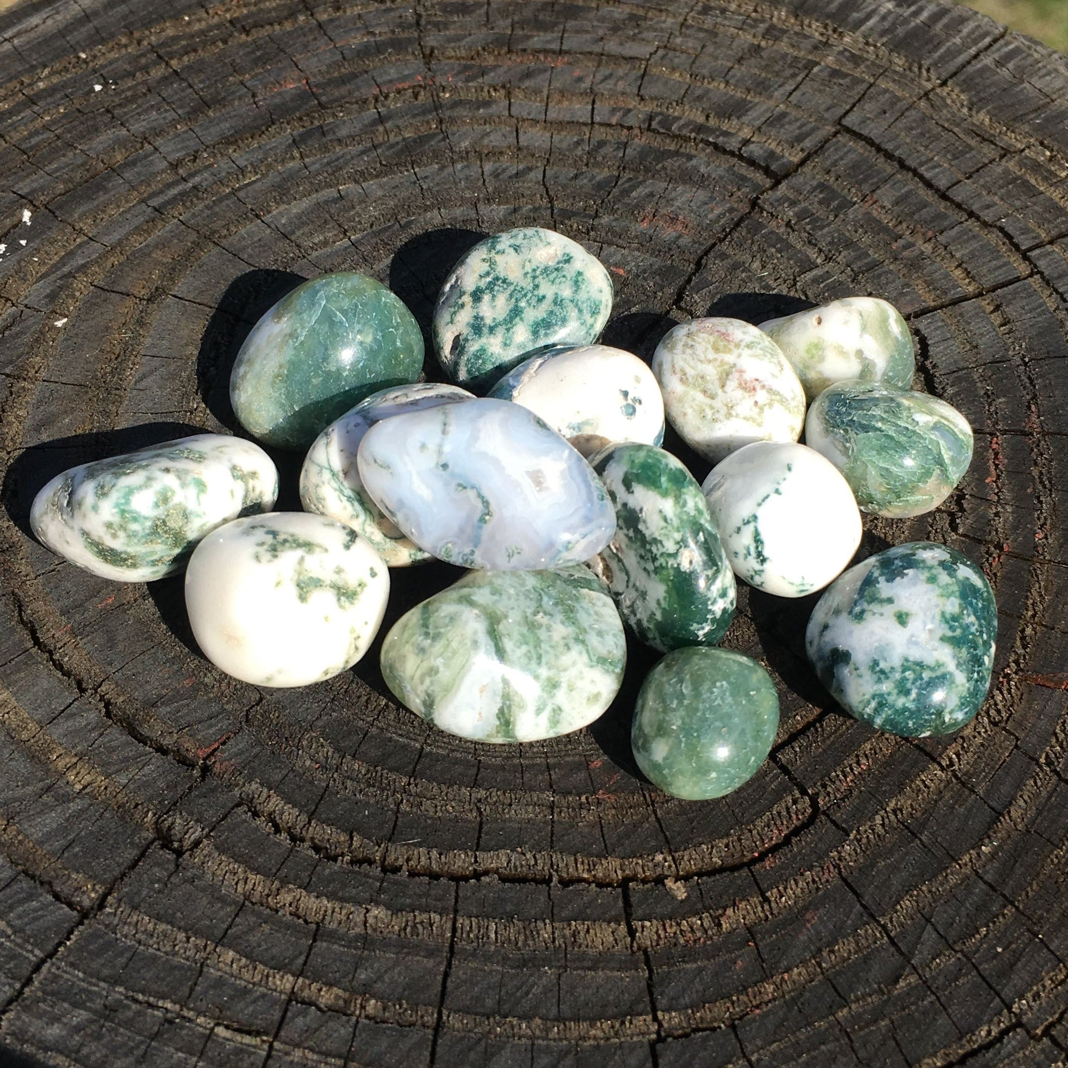 Tree Agate Tumbled Stone