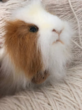 hansa guinea pig and mini lop rabbit