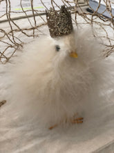 fluffy crown chick