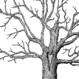 Original Tree Illustration Print - Tryst