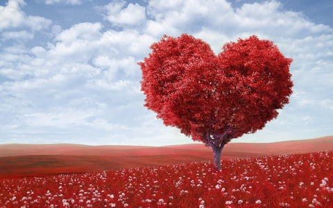 red-tree-shaped-as-a-heart-in-a-meadow