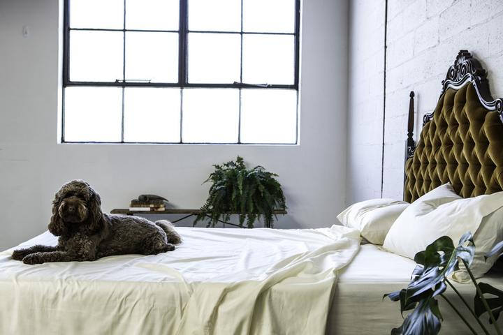 ivory-organic-bedding-sheet-set-Australia-dog-on-bed