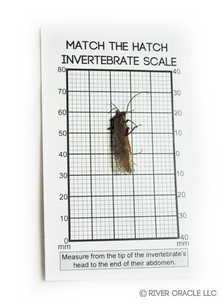River Oracle Invertebrate Magnifier Hook Size Chart With Bug.