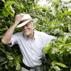 Single Origin Costa Rican Tarrazu SHB Organic Coffee
