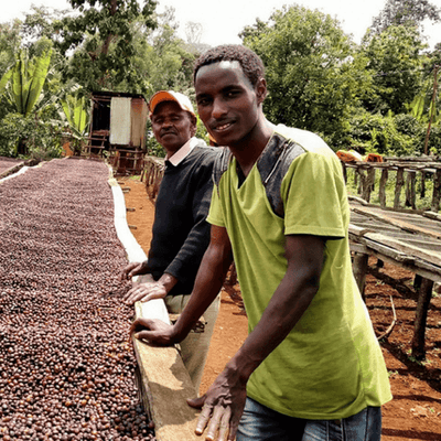 Single Origin Kenyan AA Organic Coffee - Out Of The Grey Coffee