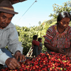 Single Origin Guatemalan ASOBAGRI Hue Hue Tenango SHB Organic Coffee