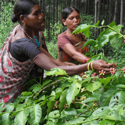 Uncover India Organic Coffees - Out Of The Grey Coffee