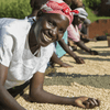 Out of Africa Organic Coffees - Out Of The Grey Coffee