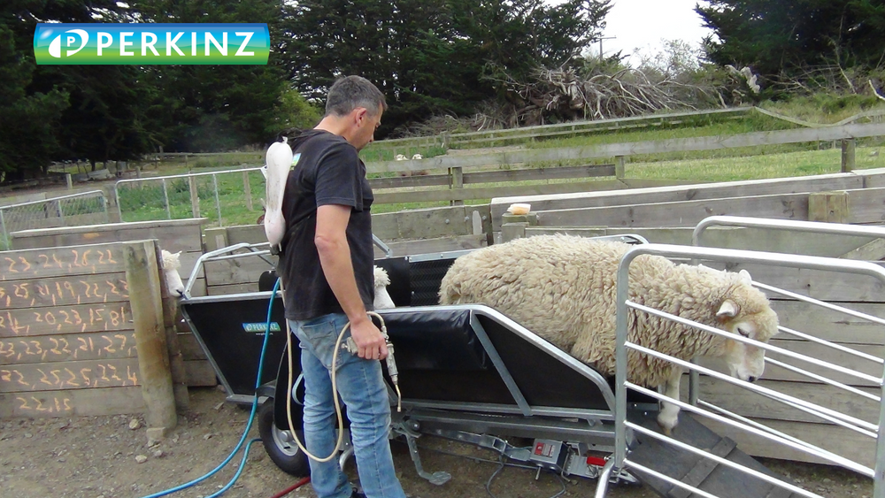 sheep handling on your farm made easy with a DrenchMaster