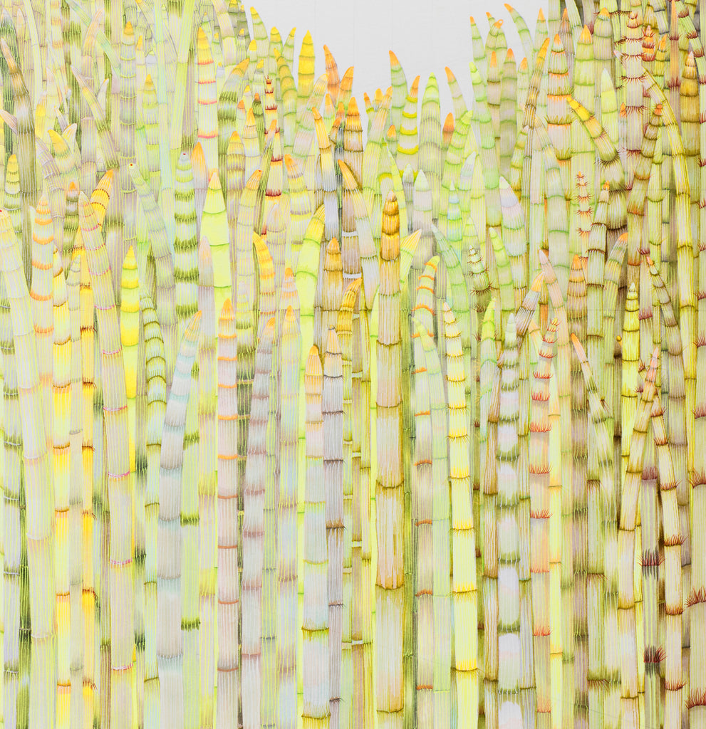 1200 Horsetails an archival inkjet print edition of 11 from the original pen and  ink drawing by Claire. Equisetum is a living fossil