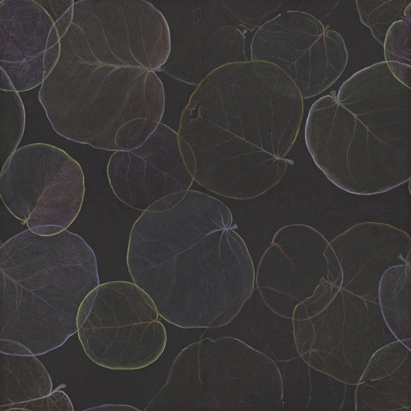 Single repeat of artist Claire Burbridge's moody dark atmospheric Sea Grape wallpaper showing translucent leaves of Florida native Coccoloba uvifera on a black background