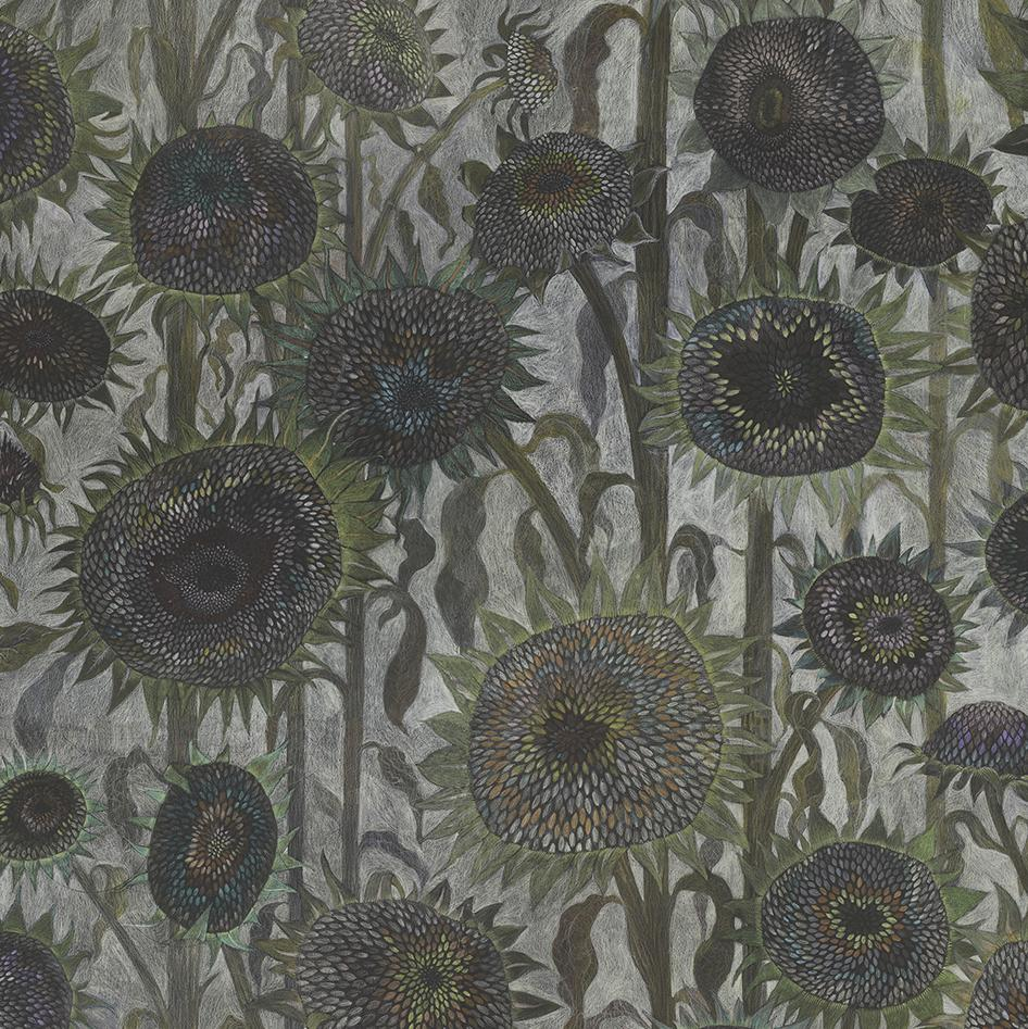Detail of Sunflower ' Seed Heads' hand drawn luxury wallpaper design by artist Claire burbridge