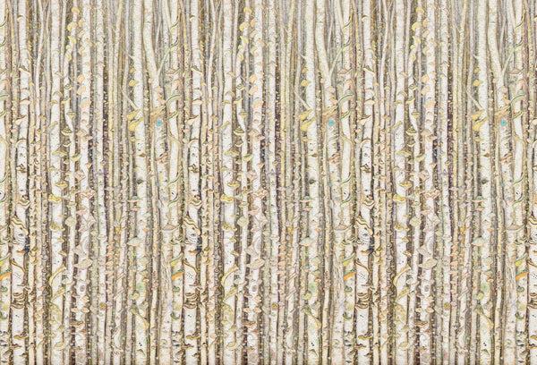 Tree mural wallpaper by artist Claire Burbridge , birch trees, polypore fungi, muted colors with bright highlights