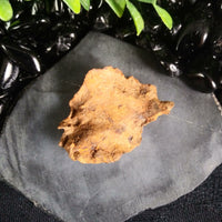 Whitecourt Meteorite (20.9 g)