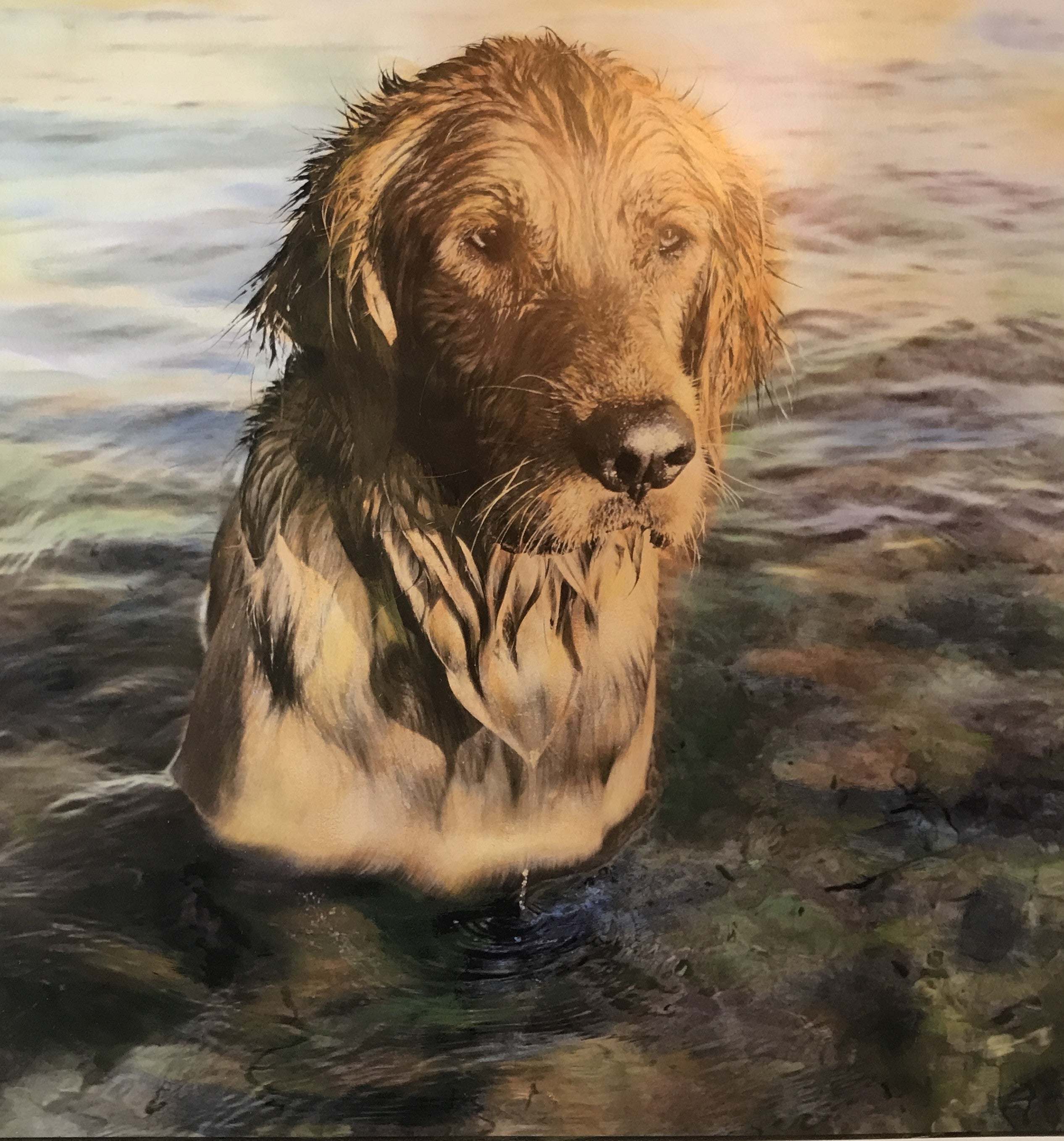 Yellow Dog® Fine Art Print: Golden Retriever Water Love