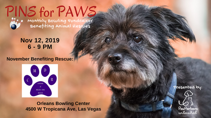 November 2019 Pins for Paws