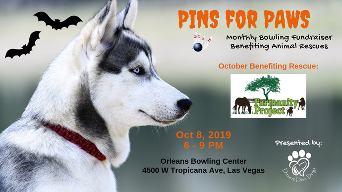 October 2019 Pins for Paws