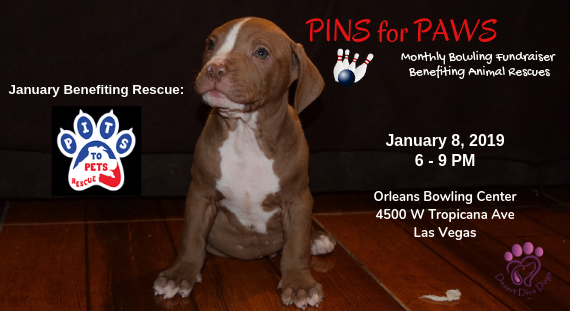 Pins for Paws - Congratulations Pits to Pets Rescue