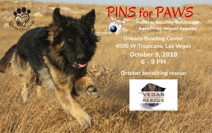 Pins for Paws - Congratulations Vegas Shepard Rescue