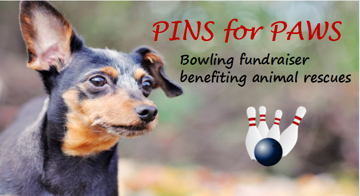 Announcing our new Monthly Event - Pins for Paws