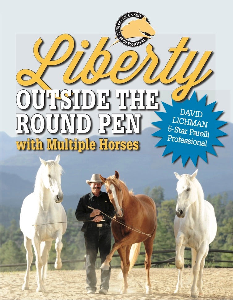Liberty Outside the Round Pen with Multiple Horses