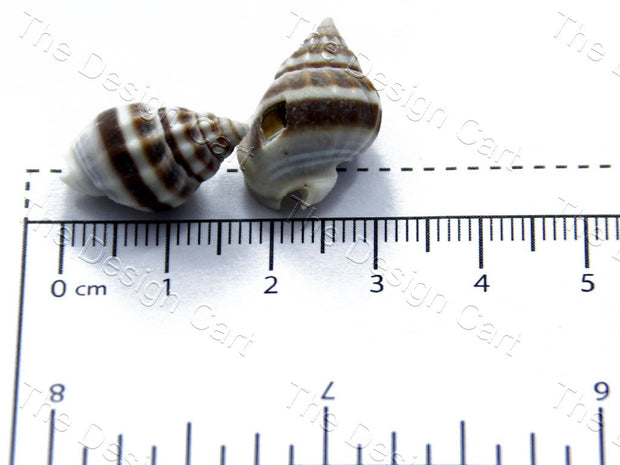 Brown White Sea Shells | The Design Cart (1378216640546)