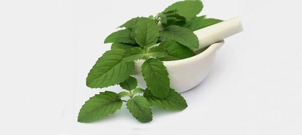 Tulsi - Treating common cold, Asthma and chronic respiratory disorders