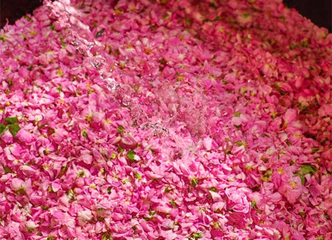 Behind the Scenes at the Rose de Mai Harvest