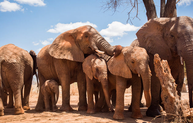 A Day in the Life of Orphan Elephants