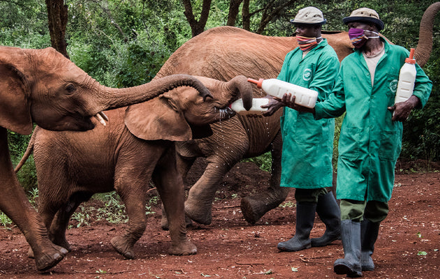 Adopt a Rescued Orphan Elephant
