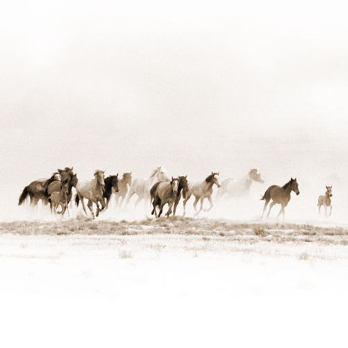 stay wild card  wild and free  horses