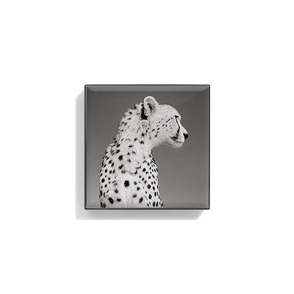 Luminescent Eye Shade - Cheetah