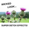 Milk Thistle - Wicked Look, Super Detox Effects!