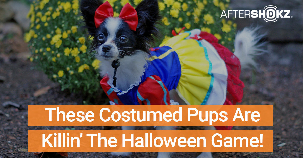 These Costumed Pups Are Killin' The Halloween Game
