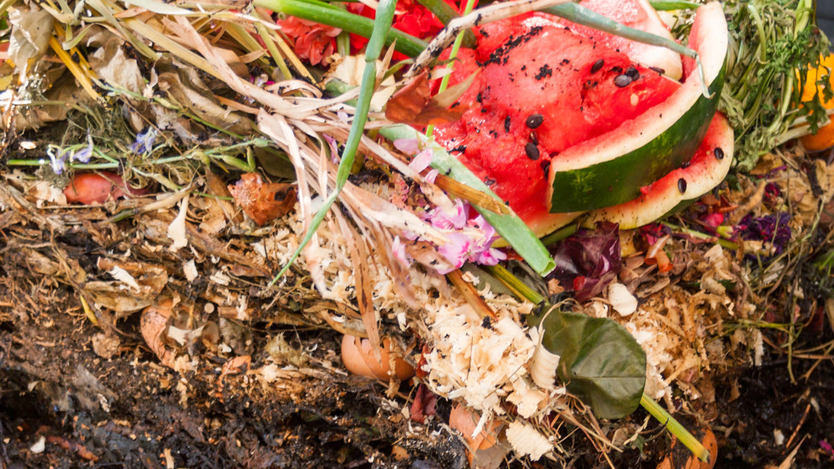 7 Most Common Asked Questions on Composting