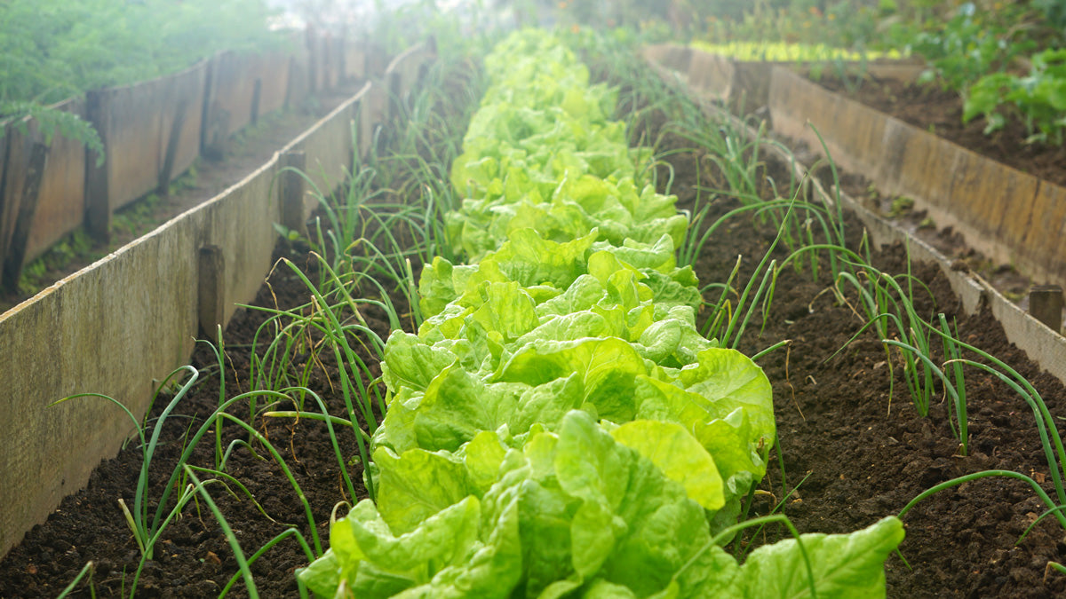Starting a Home Vegetable Garden: Benefits and How to Save Money