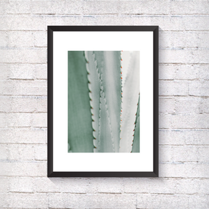 Aloe and Grey Fern - Alotta Style - Interior Prints and Posters